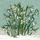 Snowdrops By Caroline Armstrong- Charity Christmas Cards - Plastic Free Packaging