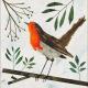 Winter robin - Suffolk Wildlife Trust Charity Christmas Cards