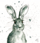 Mr Grey - World Wildlife Fund (WWF) Charity Christmas Cards