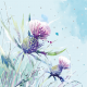 Frosty Thistle - Shelter Charity Christmas Cards