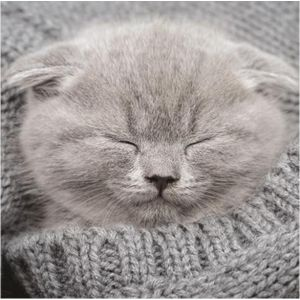 Kitten in Cardigan Everyday Single Card