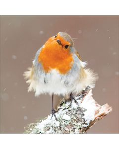 Blissful Robin - National Autistic Society Charity Christmas Cards