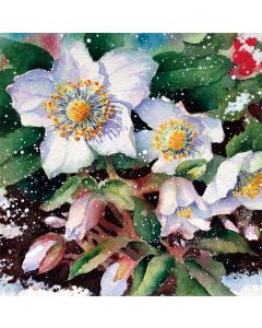 Christmas Roses - Charity Christmas Cards
