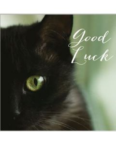 Lucky Black Cat Single Card