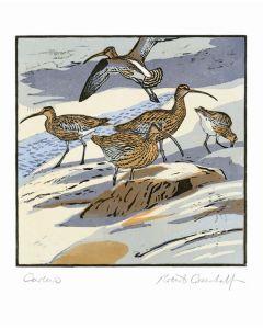 Curlews Everyday Single Card