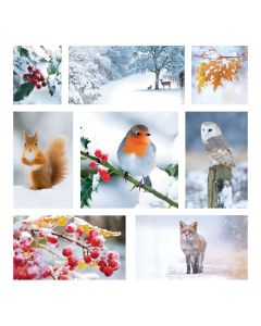 Robin Collage - Diabetes UK Charity Christmas Cards