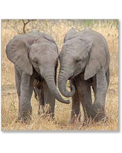 Elephants Side By Side Everyday Single Card