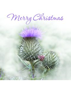 Frosted Thistle - Chest Heart & Stroke Scotland Charity Christmas Cards