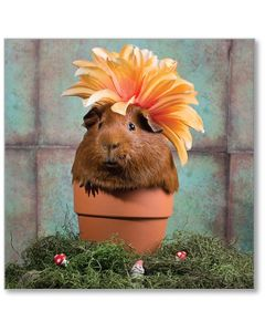 Guinea Pig In A Pot Everyday Single Card