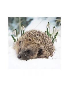 Photographic Wildlife Triple Pack  - Marie Curie Charity Christmas Cards