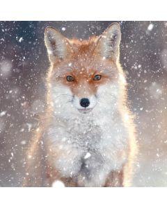 Fox - MS Society Charity Christmas Cards