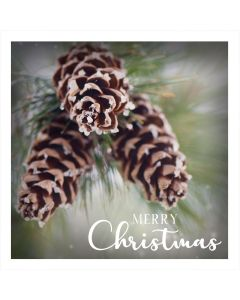 Floral Photos - Perennial Charity Christmas Cards