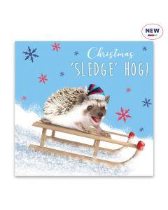 Sledgehog - Help For Heroes Charity Christmas Cards