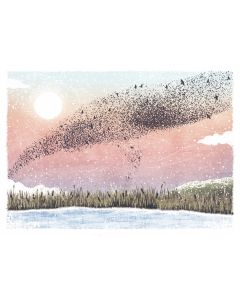 Starling Sky - Cards For Good Causes Charity Christmas Cards