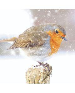Robin on Snowy Post - Stroke Association Charity Christmas Cards
