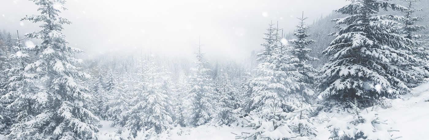 winter trees scene